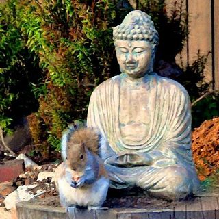 Squirrel and buddha